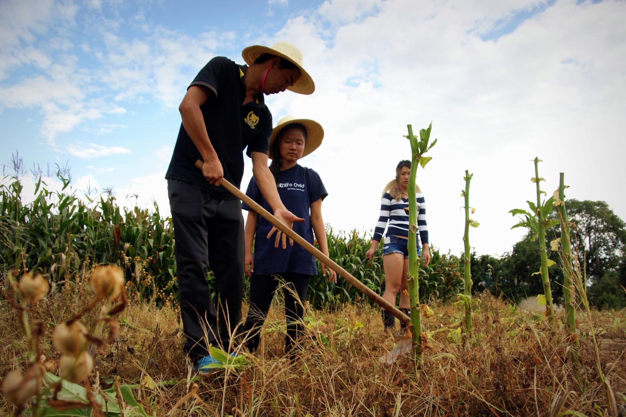 Community service in Shaxi Yunnan China